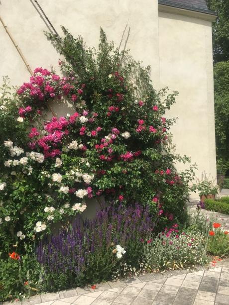 rose et blanc