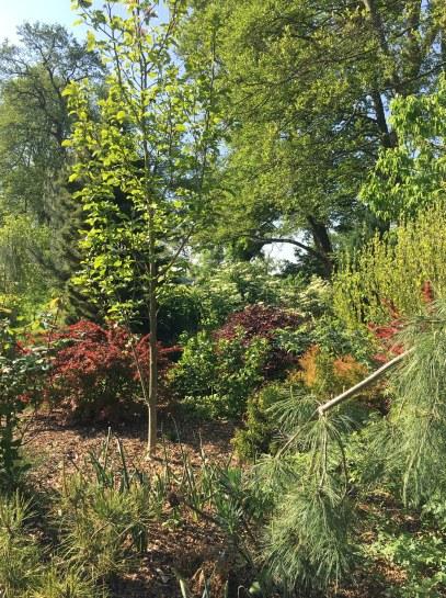 petit arboretum printemps 1