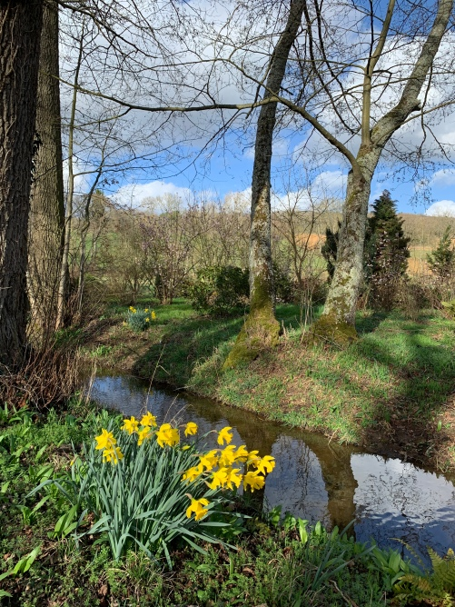 ruisseau narcisses